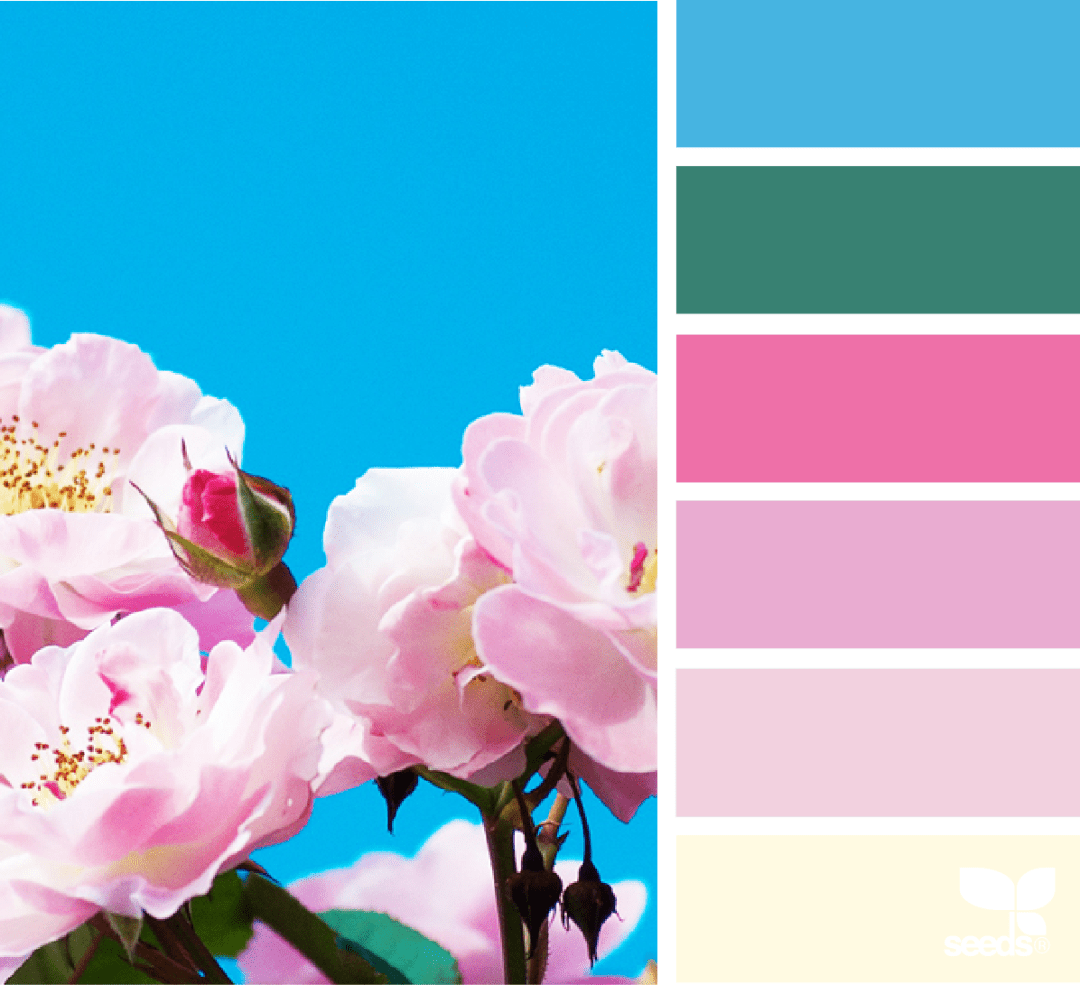 Design seed - Color Flora pink colour palette - Warm up your home with pink wall colour | Aliz's Wonderland