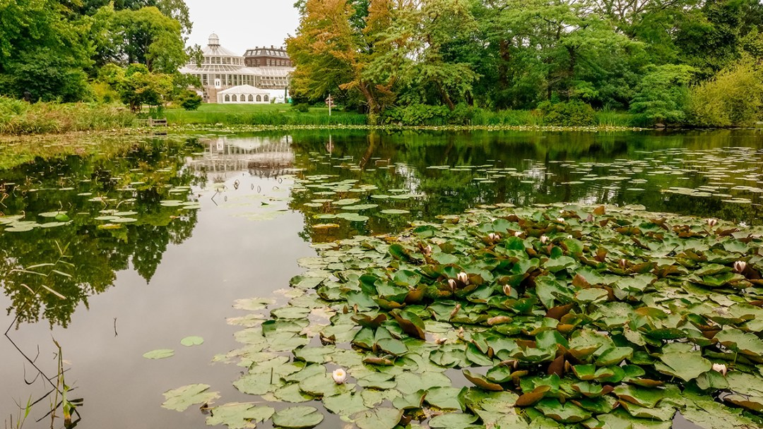 Botanical Garden and Palm House - Copenhagen 3-day travel itinerary | Aliz's Wonderland