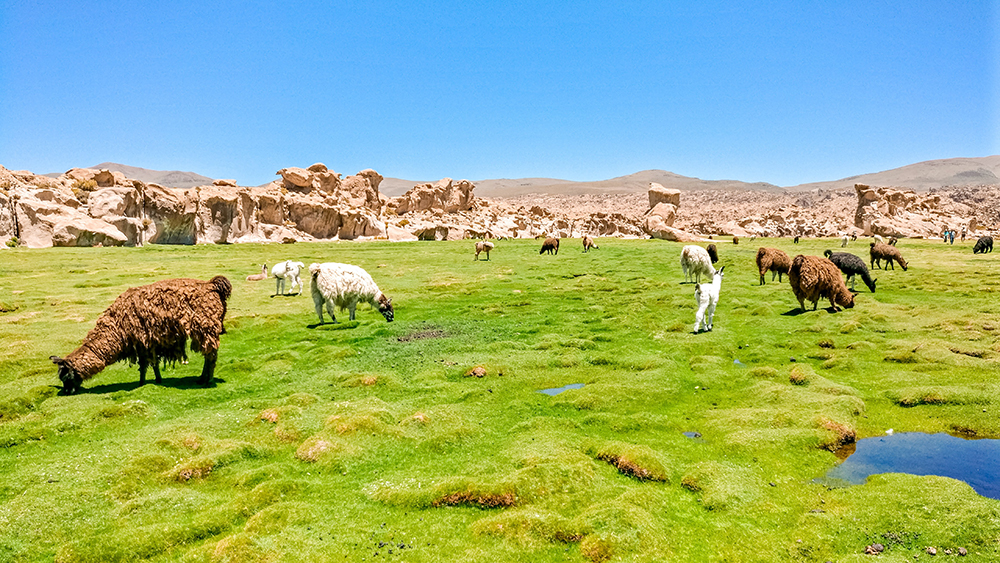 Katal Canyon and Laguna Negra and llamas - Bolivia 2-week itinerary and travel guide | Aliz's Wonderland