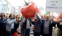"""الاتفاق الزراعي بين المغرب والاتحاد الأروبي .. لعبة """"ثلاث ورقات"""" ."""