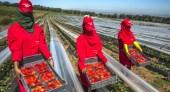 موعد عملية الانتقاء تجر اسبانيا إلى طلب اكثر من 17 ألف يد عاملة من المغرب