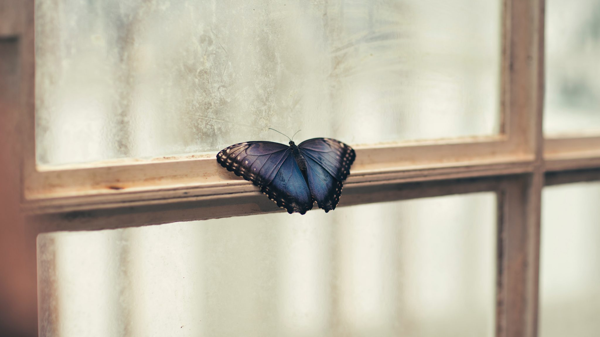 Butterfly on a Window