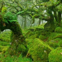 Moss Covered Forest in Dartmoor, England