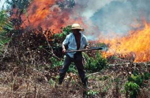 Farmer setting fire to Amazon