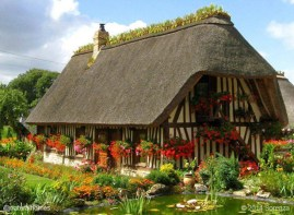 Traditionally the thatched roof is topped with a bed of clay where iris are planted. The roots, or rather rhizomes, of the iris help to mesh together the reed ends in the thatch and remove excess moisture from the ridge. Normandy chaumiere often have a flint foundation with half-timbered walls with torchis (French cob) on laths (wattle) as the infill.