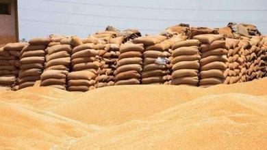 Photo of حبوب حماة ترفض شراء القمح من إدلب.. والسورية للتجارة تشتري قمحاً بمناقصة عالمية
