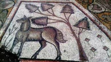 Photo of نقل أرضية الكنيسة المكتشفة في عقيربات إلى متحف حماة الوطني