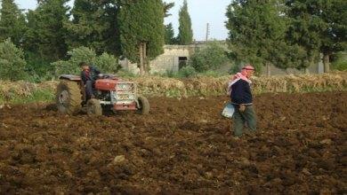 Photo of فصل 900 عامل موسمي من الهيئة العامة لتطوير الغاب في حماة