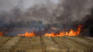 Photo of احتراق أكثر من 163 دونماً من القمح والشعير في سهل الغاب