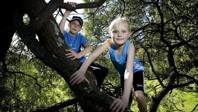 Photo of دراسة: الأطفال الناشئون في أماكن محاطة بالأشجار أكثر قدرة على التركيز
