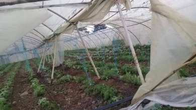 "Photo of ""تنين البحر"" يضرب مجدداً ساحل طرطوس.. وأضرار بالغة في المزروعات"
