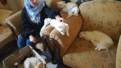 """Photo of """"الأنامل البيضاء"""".. فريق شبابي لإنقاذ الحيونات في حمص"""