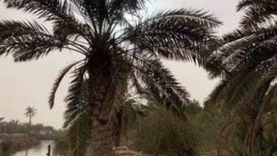 """Photo of عراقي يقتل ويصيب 8 من أفراد عائلته بسبب """"نخلة"""""""