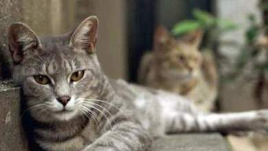Photo of أمير دبي يكافئ 4 أشخاص أنقذوا قطة بمبلغ 200 ألف درهم