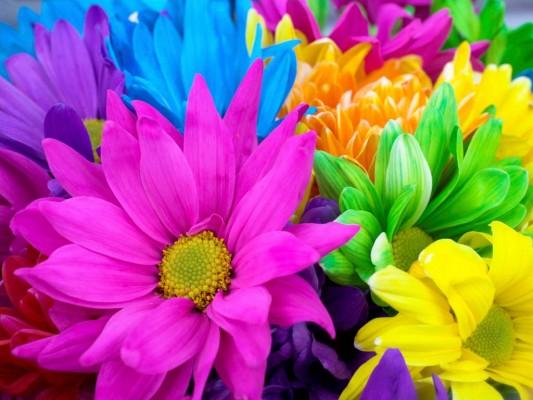 صور جميله و رائعه لمجموعة من اللازهار الطبيعية تخطف العقل