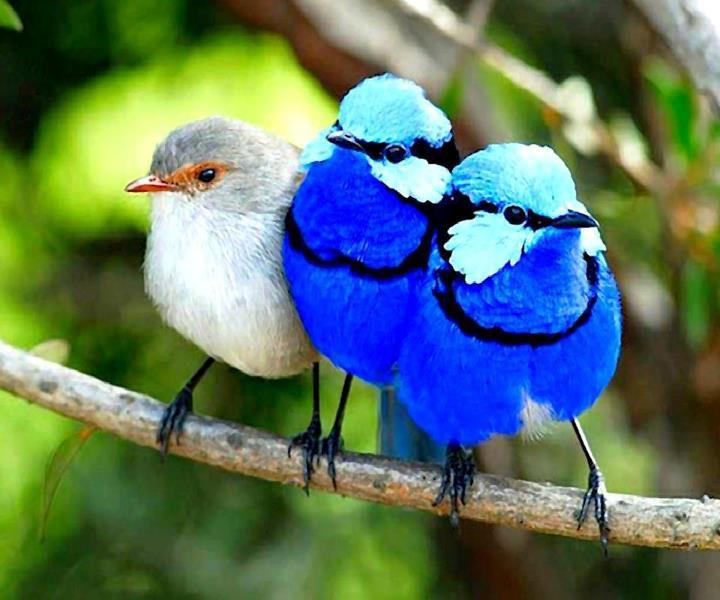 اروع واجمل الصور طيور ملونة جميلة اروع روعه