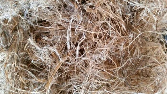 Пенька́ — волокна стеблей конопли