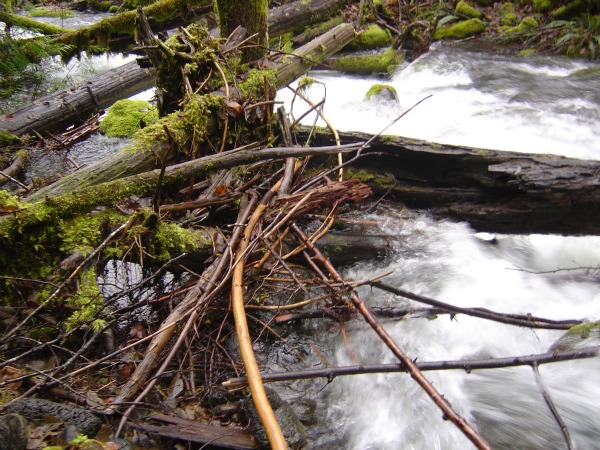 Allochthonous material in the form of coarse particulate organic matter in a mountain stream in Oregon.