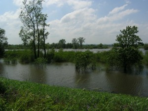 Big Muddy outside the levee
