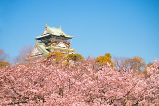 満開のさくら大阪城