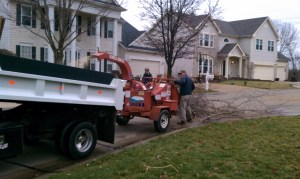 tree removal service in St Louis, MO