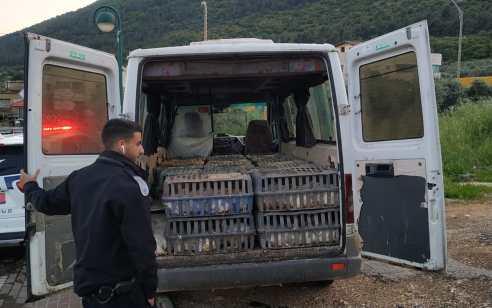 כ-330 עופות דחוסים בארגזים ומפוזרים אותרו בתא מטען של רכב בצפון