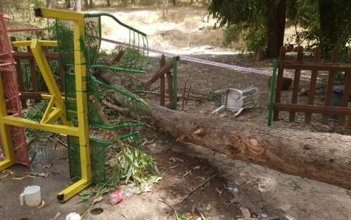 מות הילד מנפילת עץ: המשטרה הוציאה צו סגירה למקום ללא הגבלת זמן למקום
