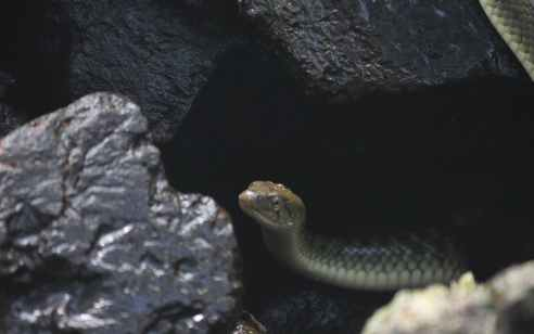 אישה כבת 35 הוכשה מנחש בגליל המערבי – מצבה קשה