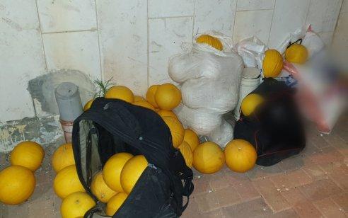 """חוות השקמים: 4 פועלים זרים נעצרו בחשד שגנבו כ- 100 ק""""ג תוצרת חקלאית"""