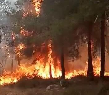 צוותי כיבוי רבים בסיוע שישה מטוסים פועלים בשריפת יער וחורש גדולה סמוך ליישוב מטע ליד כביש 375