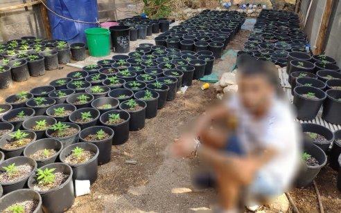 נחשפה משתלה מאולתרת לגידול מריחואנה באילת – 2 חשודים בני 27 נעצרו