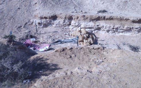 """בפעילות מג""""ב נחשפו 3 חממות ומערה בהן מאות שתילי קנאביס בשלבי גידול וייבוש שונים בשטחי אש"""