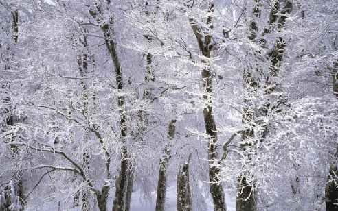 """מזג האוויר הסוער נמשך: חשש משיטפונות וסיכוי לשלג – מפלס הכנרת הוסיף 5 ס""""מ ביממה"""