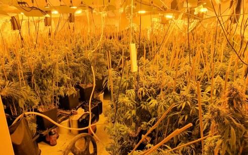 יבנה: בלשי המשטרה חשפו מעבדה לגידול סמים
