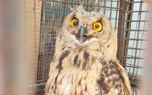 בפעילות השיטור העירוני ברמלה נתפס עוף דורס שהוחזק בניגוד לחוק
