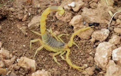 """ילד בן 7 במצב קשה לאחר שנעקץ ע""""י עקרב ביישוב טנא עומרים בהר חברון"""