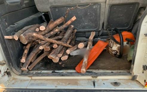 """נתפסו """"על חם"""" שני חשודים שכרתו עצים בפארק חצרים שבמועצה האזורית בני שמעון"""