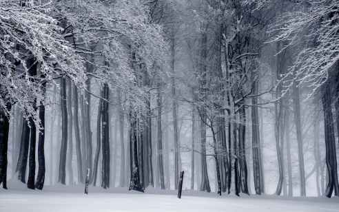 הקור חוזר: אחר הצהריים יהיה גשום וסוער – ברביעי שלג גם בירושלים | התחזית המלאה