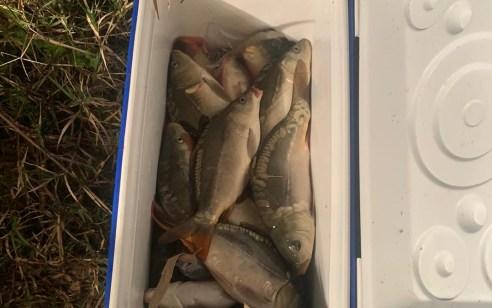 """שלושה חשודים נתפסו """"על חם""""  בגניבת דגים בצפון הארץ"""