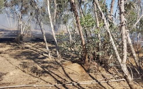 טרור הבלונים: 8 שריפות פרצו בישובי עוטף עזה ונגרמו מבלונים