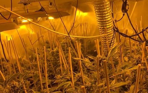 מעבדת סמים עם מאות שתילי סם נחשפה אמש בדירה באשקלון – מפעיל המעבדה נעצר 'על חם'