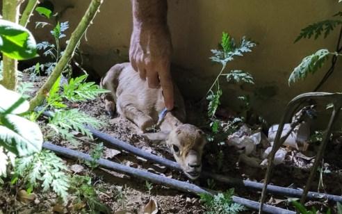 נעצרו 2 חשודים באחזקת חיות בר וחשד לציד לא חוקי באזור יריחו