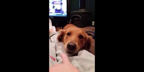 Ίσως ένα σκυλί, λίγο πιο περίεργο από τα άλλα!