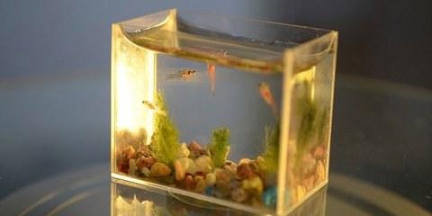 μικρότερο ενυδρείο στον κόσμο smallest aquarium