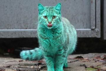 πράσινη γάτα βουλγαρδία allabout.gr