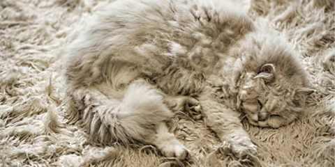 15 γατάκια σε τέλειο καμουφλάζ