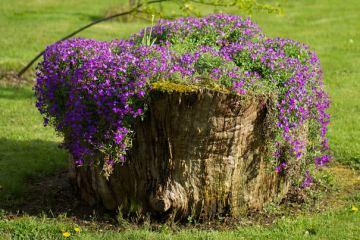 Κορμοί δέντρων μεταμορφώνονται σε υπέροχες γλάστρες
