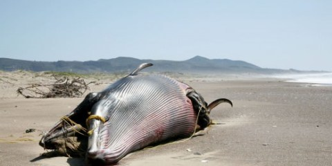 O πλανήτης βρίσκεται ένα βήμα πριν την 6η μαζική εξαφάνιση ειδών