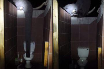 Επιδρομή ελέφαντα σε… τουαλέτα