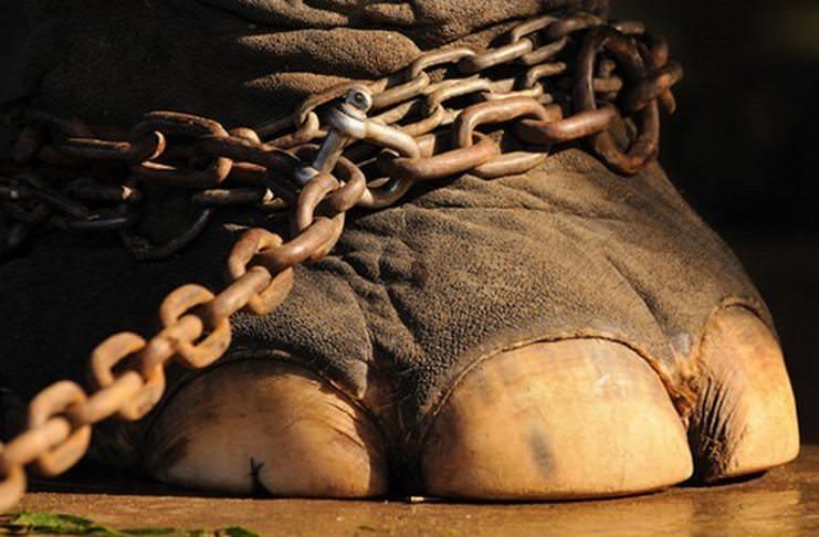 Η Ολλανδία επίσημα απαγόρευσε τη χρησιμοποίηση άγριων ζώων στο τσίρκο